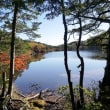 白駒池の紅葉サンデー