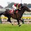 競馬 ダイヤモンドS&京都牝馬Sの予想