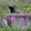 アニマルプランターの猫草