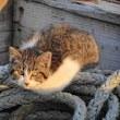 港の猫 Ⅴ