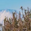 21/Nov  富士山と野鳥