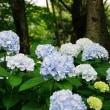 梅雨のあいまに石神井公園へ その4