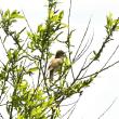 モエレの鳥たち 5/20 オオヨシ コヨシとオジロワシ