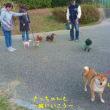 ティファニーのお散歩!