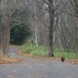 11月12日(日)ときわ自然散歩の様子