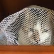 猫ちゃん一斉ワクチン