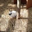 ウサギが1羽いました