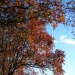 多布施川遊歩道・公園の秋を訪ねて
