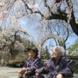 ~お花見ツアー🌸 4/13 長谷寺~