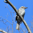 近所の公園で野鳥撮影の練習・・・1月15日 ☆やっぱりうまくなるには練習あるのみ?!