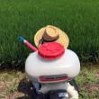 毎日暑いですが肥料撒きしています。