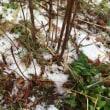 ゆき  雪