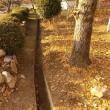 枯れ葉集めや 側溝掃除の毎日です。