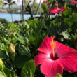 ハワイ島④