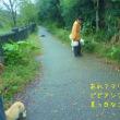 夕方の雨上がりの遊歩道
