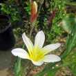春 の 庭!!・・・パート4