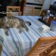 皮なしキッシュ&ケンつぁん猫を飼う