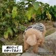黒豆の枝豆は最高(^O^)夏野菜もう少し頑張れ!