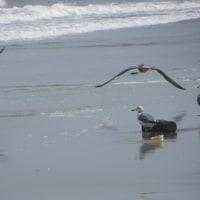 ここは、鹿島灘湯壷の浜!