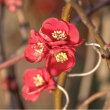 20/Feb 富士と野鳥と花と月