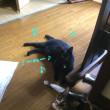 黒猫にはナイショ
