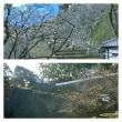 熊本城の復旧過程