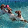 水中ボール争奪戦!