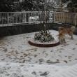 久しぶりの雪遊び