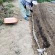 トーガンの収穫