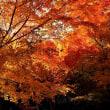 「もみじ寺」の紅葉