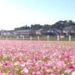 昨日の走り 印旛沼1周
