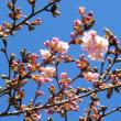 前橋の路地第34回は、前橋駅南の「代田神社の参道」です。
