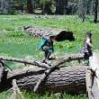 Sequoia National Park でジュニアレンジャーになる