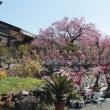 みやま市梅花園に行ってきました