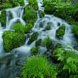 6月11日  初夏の渓流