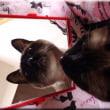 鏡の中のタヌキ猫