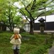 新緑まぶしい「大徳寺 黄梅院」。27日まで春の特別公開。