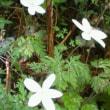 Fw:井原山の花々は