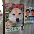 犬が立候補