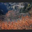 里山残紅黄葉
