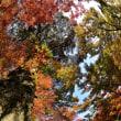 基山の大興善寺からp3