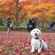 秋の楽しみ