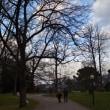 110. 植物園で銀杏を踏む