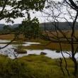 草紅葉に染まる八島湿原散歩。