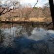 静寂  幻想的。。 ・・・・ 三宝寺池
