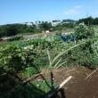 2017年9月19日(火) 畑の台風18号被害調査+大根