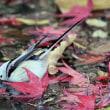 今日の鳥 シマエナガ 紅葉の落ちた水辺に水浴びに来たシマエナガ