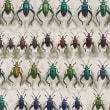 きらめく昆虫標本展(3)