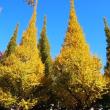 黄葉の神宮外苑