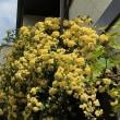 春 花 緑4